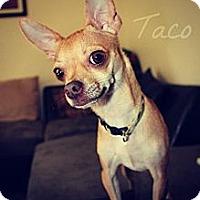 Adopt A Pet :: Taco - Justin, TX