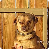 Adopt A Pet :: Rugly - Littlerock, CA