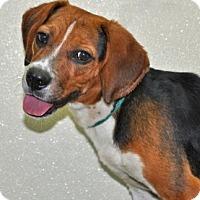 Adopt A Pet :: Bakin - Port Washington, NY