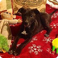 Adopt A Pet :: Tink - Homewood, AL