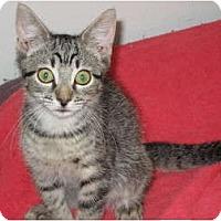 Adopt A Pet :: Megan - Huffman, TX