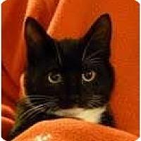 Adopt A Pet :: Cinder - Fredericton, NB