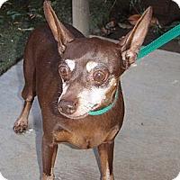 Adopt A Pet :: Bella - Corona, CA