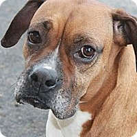 Adopt A Pet :: Amie - ARDEN, NC