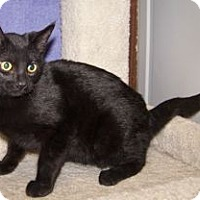 Adopt A Pet :: K-Nicholas1-Jellybean - Colorado Springs, CO