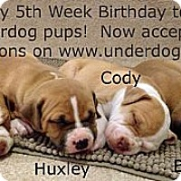 Adopt A Pet :: Huxley - Framingham, MA