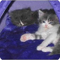Adopt A Pet :: Froggie - Davis, CA