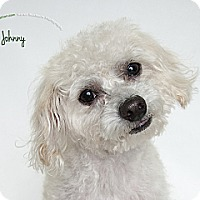 Adopt A Pet :: Johnny Angel - Rancho Mirage, CA