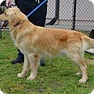 Adopt A Pet :: Hunk