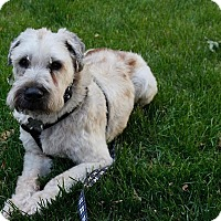 Adopt A Pet :: Murray - Chicago, IL