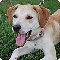 Adopt A Pet :: Kenzi - Richmond, VA