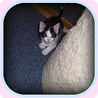 Adopt A Pet :: Pandy - A Fun-Loving Cutie!! - South Plainfield, NJ