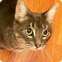 Adopt A Pet :: Moses - Novato, CA