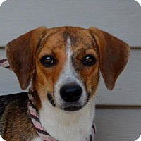 Adopt A Pet :: **DAISY** MEET FEB 13th! - Mukwonago, WI
