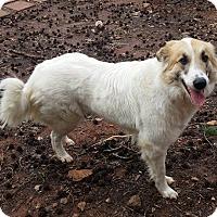 Adopt A Pet :: Honey - Lawrenceville, GA