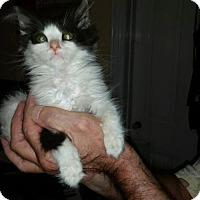 Adopt A Pet :: NJ - Nugget - Blairstown, NJ