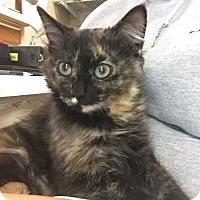 Adopt A Pet :: Patti - Cashiers, NC