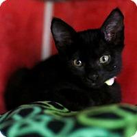 Adopt A Pet :: Mankey - Austin, TX