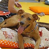 Adopt A Pet :: Kinsley - Waterbury, CT