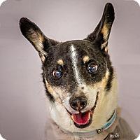 Adopt A Pet :: Matthew - Prescott, AZ