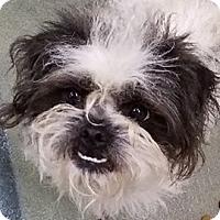 Adopt A Pet :: Sid - Bloomington, IL