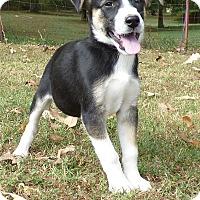 Adopt A Pet :: Cheryl - Newburgh, NY