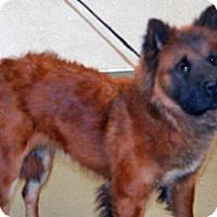 Adopt A Pet :: Olivia - Wildomar, CA