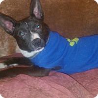 Adopt A Pet :: Julia - Cranston, RI