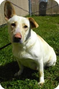 Terrier (Unknown Type, Medium)/Fox Terrier (Smooth) Mix Dog for adoption in Lincolnton, North Carolina - Cheyenne