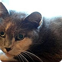 Adopt A Pet :: Nadya - Palm City, FL