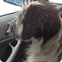 Adopt A Pet :: JoJo - Temecula, CA
