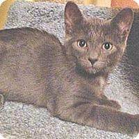Adopt A Pet :: Dean - Seminole, FL