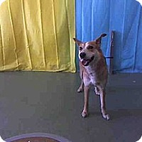 Adopt A Pet :: Sunshine URGENT - San Diego, CA