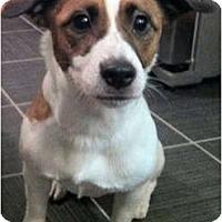 Adopt A Pet :: Jasper - Alexandria, VA