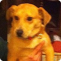 Adopt A Pet :: Mama - McKeesport, PA