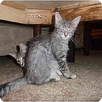 Adopt A Pet :: Cindy - Davis, CA