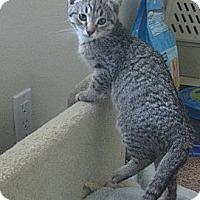 Adopt A Pet :: Merrily - Irvine, CA