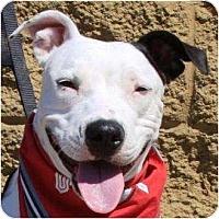 Adopt A Pet :: Sweetie - Gilbert, AZ