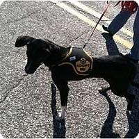 Adopt A Pet :: Danica - Richmond, VA