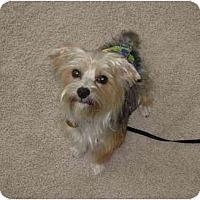 Adopt A Pet :: Beamer - Conroe, TX