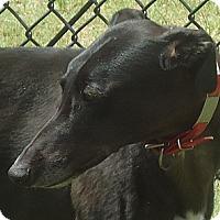 Adopt A Pet :: TNT Trust In Me - Longwood, FL
