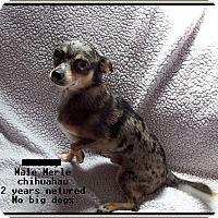 Adopt A Pet :: Poncho - Hampton, VA