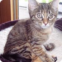 Adopt A Pet :: Poppy - brewerton, NY