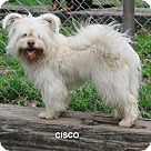 Adopt A Pet :: Cisco ~B