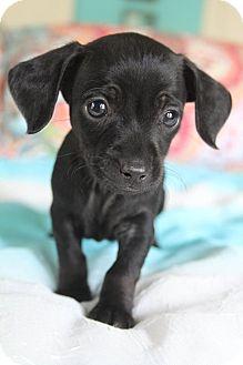 Dog Rescue Southington