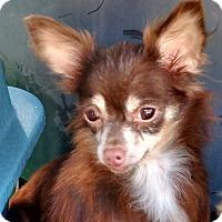 Adopt A Pet :: Luau - San Diego, CA