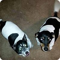 Adopt A Pet :: Rosarita & Rover in Ft. Worth - Austin, TX