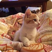 Adopt A Pet :: Reebok160015 - Atlanta, GA