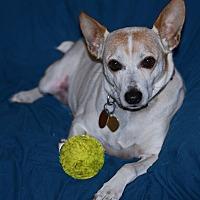 Adopt A Pet :: Trigger - San Francisco, CA