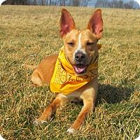 Adopt A Pet :: WHEELER - New Cumberland, WV